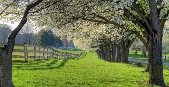 farm_trees
