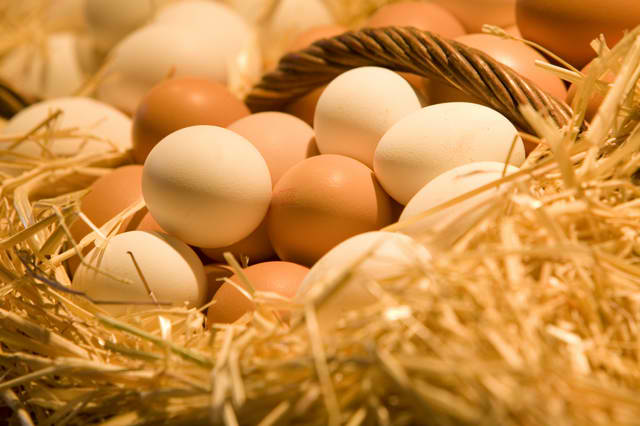 Farm_Fresh_Eggs_172112602_std