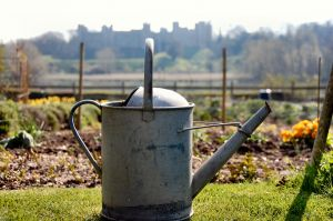 watering-can-984999-m