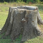 tree_stump