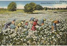 Cotton postcard