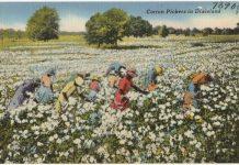 Cotton postcard